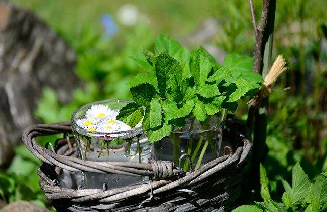 Jardin aromatique : des herbes fraîches toute l'année !
