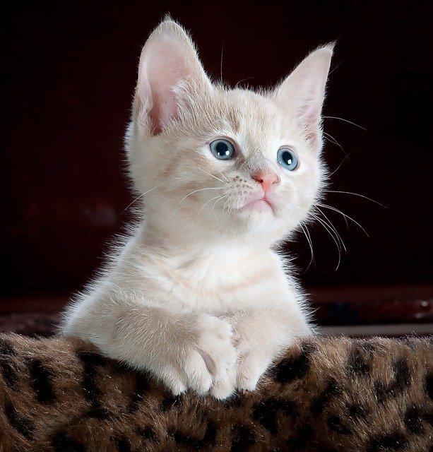 Éducation chaton: les règles à connaître pour une parfaite cohabitation