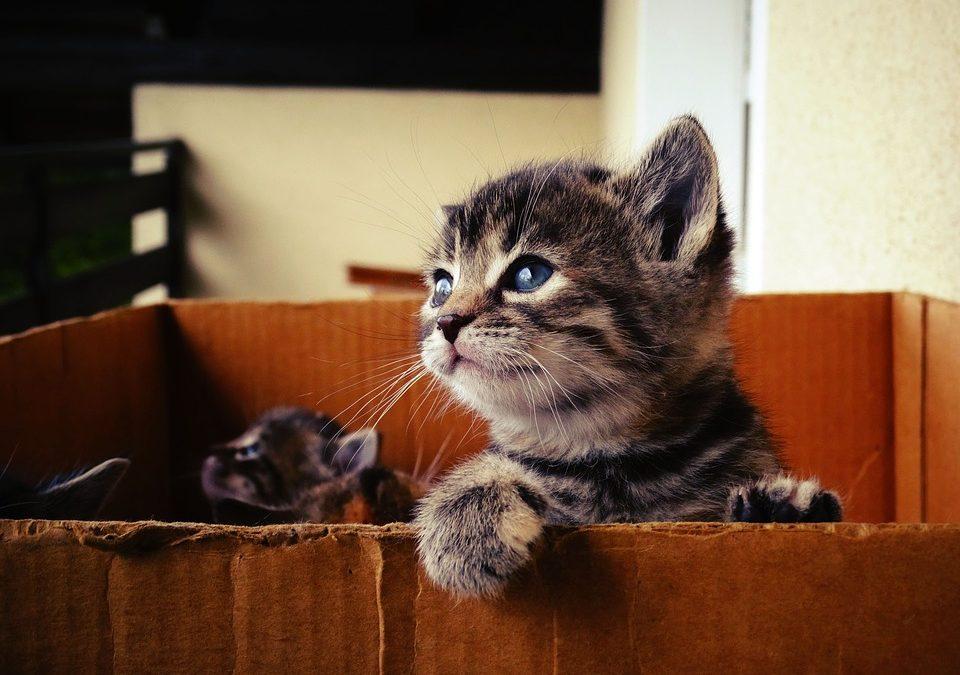 Comment empêcher un chaton de mordre et de griffer ?