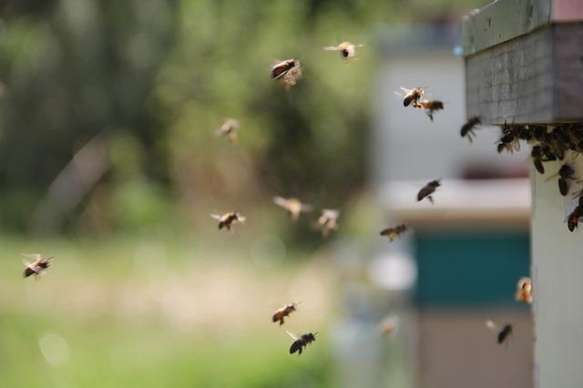Cohabitation animaux de compagnie et abeilles du jardin
