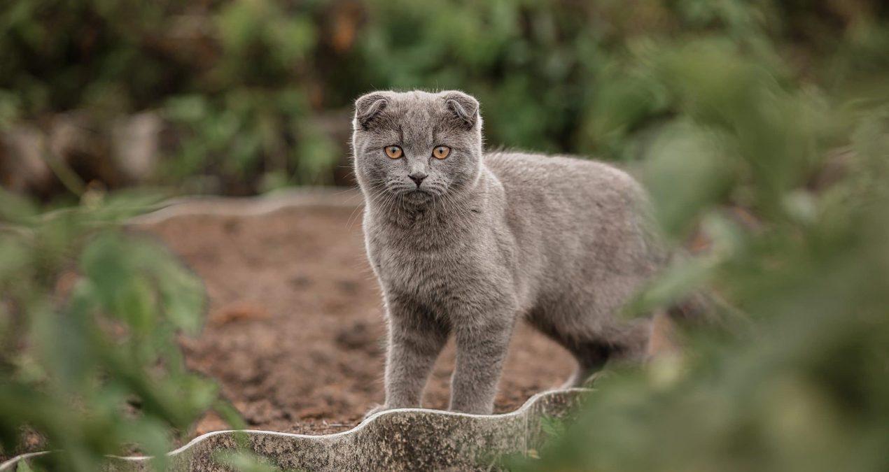 Comment aménager un espace sécurisé pour son chat dans son jardin ?